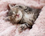 MP1706_KITTEN_sleeping.jpg